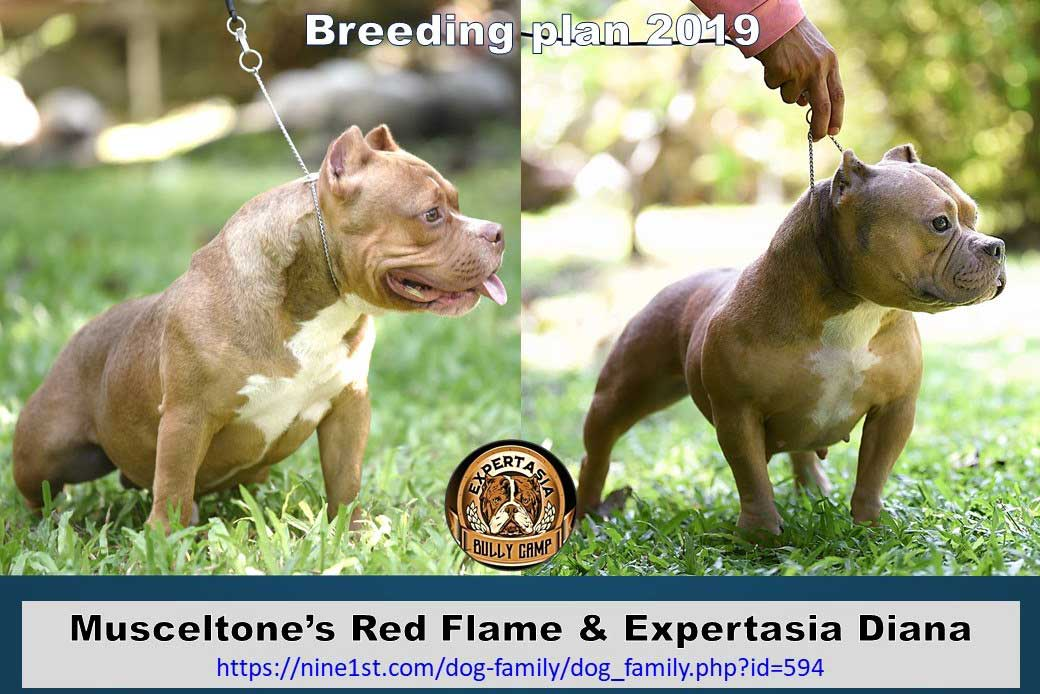 Muscletone's Red Flame & Expertasia Nadia