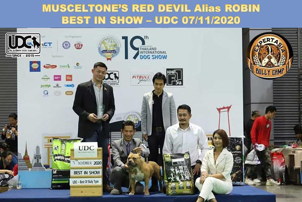 Muscletone's Red Devil Alias Robin - Best in show UDC 7 November 2020